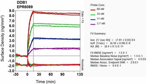 OI-RD Scanning - Anti-DDB1 antibody [EPR6089] (ab109027)