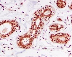 Immunohistochemistry (Formalin/PFA-fixed paraffin-embedded sections) - Anti-DDB1 antibody [EPR6089] (ab109027)