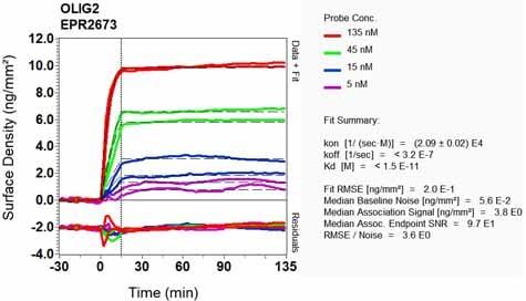 OI-RD Scanning - Anti-Olig2 antibody [EPR2673] (ab109186)