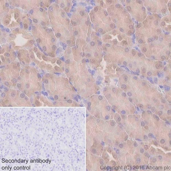 Immunohistochemistry (Formalin/PFA-fixed paraffin-embedded sections) - Anti-UFM1 antibody [EPR4264(2)] (ab109305)
