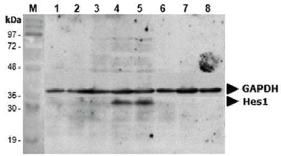 Functional Studies - Recombinant Human Contactin 6 protein (ab109345)