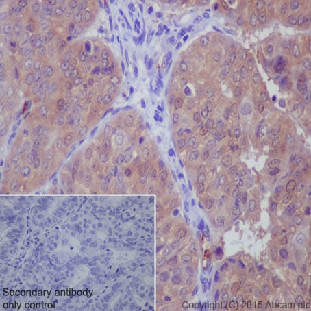 Immunohistochemistry (Formalin/PFA-fixed paraffin-embedded sections) - Anti-Peroxiredoxin 2/PRP antibody [EPR5154] (ab109367)
