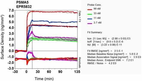 OI-RD Scanning - Anti-Proteasome 20S alpha 5/PSMA5 antibody [EPR5832] (ab109387)