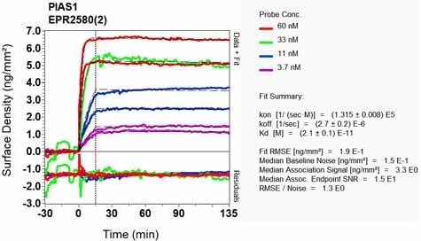 Other - Anti-PIAS1 antibody [EPR2580(2)] (ab109388)