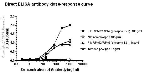 ELISA - Anti-RPA32/RPA2 (phospho T21) antibody [EPR2846(2)] (ab109394)