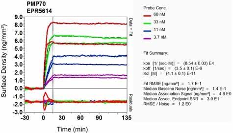 OI-RD Scanning - Anti-PMP70 antibody [EPR5614] (ab109448)