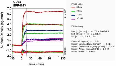 Other - Anti-CD64 antibody [EPR4623] (ab109449)