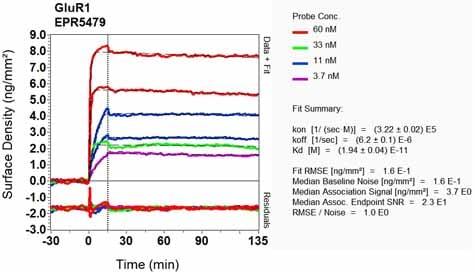 OI-RD Scanning - Anti-Glutamate Receptor 1 (AMPA subtype) antibody [EPR5479] (ab109450)