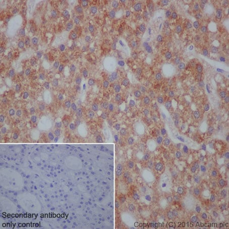Immunohistochemistry (Formalin/PFA-fixed paraffin-embedded sections) - Anti-Hsp105/HSP110 antibody [EPR4576] (ab109624)