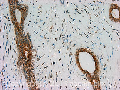 Immunohistochemistry (Formalin/PFA-fixed paraffin-embedded sections) - Anti-GRP78 BiP antibody (ab109659)