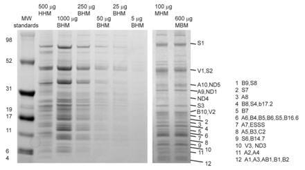 Immunoprecipitation - Complex I Immunocapture Kit (ab109711)
