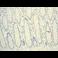 Immunohistochemistry (Formalin/PFA-fixed paraffin-embedded sections) - Anti-Myelin oligodendrocyte glycoprotein antibody [EP4281] (ab109746)