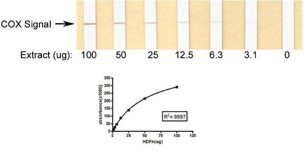 Complex IV Human Enzyme Activity Dipstick Assay Kit (ab109876)