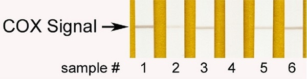 Complex IV Human Enzyme Activity Dipstick Assay Kit (ab109876