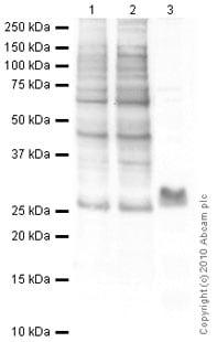 Western blot - Anti-Histone H1.0 antibody [27] (ab11080)