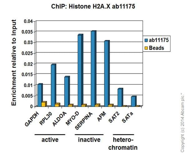 ChIP - Anti-Histone H2A.X antibody - ChIP Grade (ab11175)
