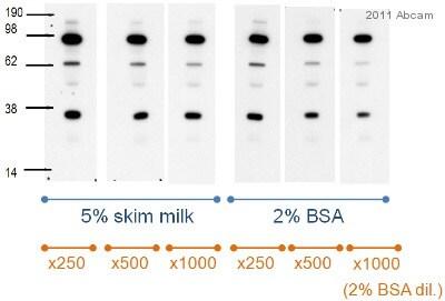 Western blot - Anti-C3 / C3a antibody [474] (ab11872)