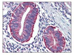 Immunohistochemistry (Formalin/PFA-fixed paraffin-embedded sections) - Anti-DAP12 antibody (ab110117)