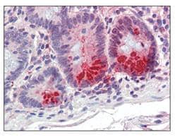 Immunohistochemistry (Formalin/PFA-fixed paraffin-embedded sections) - Anti-SRD5A1 antibody (ab110123)