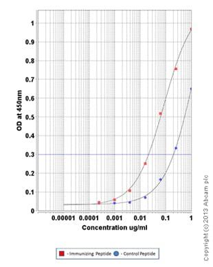 ELISA - Anti-VEGF Receptor 2 (phospho Y951) antibody (ab110213)