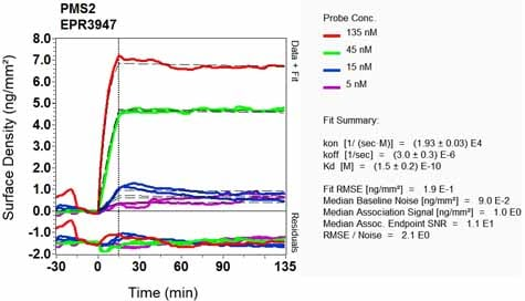 OI-RD Scanning - Anti-PMS2 antibody [EPR3947] (ab110638)