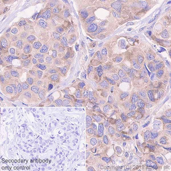 Immunohistochemistry (Formalin/PFA-fixed paraffin-embedded sections) - Anti-TRADD antibody [EPR3604] (ab110644)