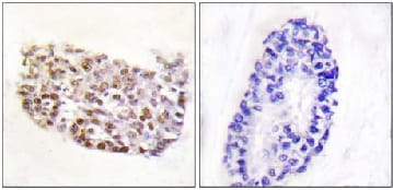 Immunohistochemistry (Formalin/PFA-fixed paraffin-embedded sections) - Anti-NFAT5 antibody (ab110995)