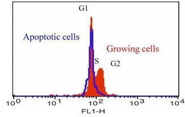 Flow Cytometry - Cell Cycle Assay Kit (Fluorometric - Green) (ab112116)
