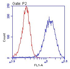 Flow Cytometry - Anti-ENO1 antibody [2G2AG11BF8] (ab112994)