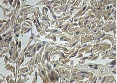 Immunohistochemistry (Formalin/PFA-fixed paraffin-embedded sections) - Anti-ALDH1L2 antibody (ab113496)
