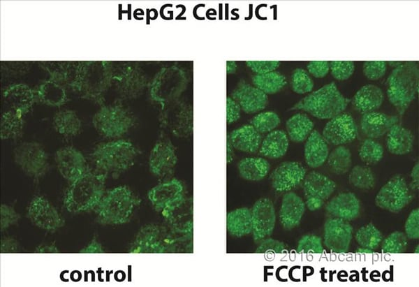JC1 Mitochondrial Membrane Potential Assay Kit using green fluorescence imaging