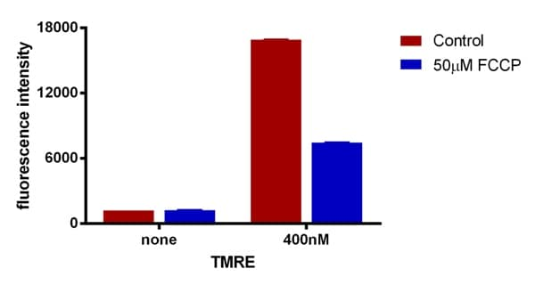 Analysis of TMRE staining using a fluorescent plate reader and a microplate.