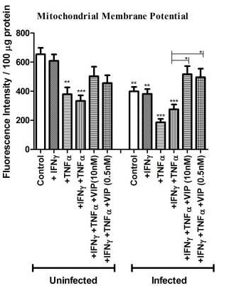 Mitochondrial membrane potential assayed using TMRE in the study of VIP