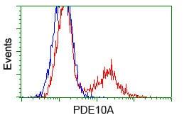 Flow Cytometry - Anti-PDE10A antibody [OTI3G9] (ab114025)
