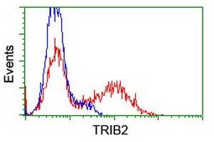 Flow Cytometry - Anti-TRIB2 antibody [OTI8D11] (ab117981)