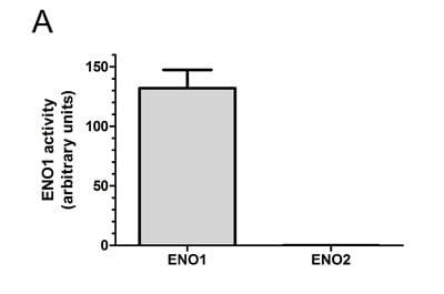 Functional Studies - ENO1 Human Activity Assay Kit (ab117994)