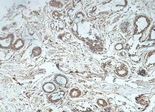 Immunohistochemistry (Formalin/PFA-fixed paraffin-embedded sections) - Anti-JOSD1 antibody (ab118221)