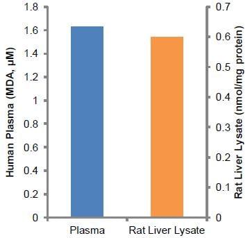 功能研究-脂质过氧化(MDA)检测试剂盒(AB118970)