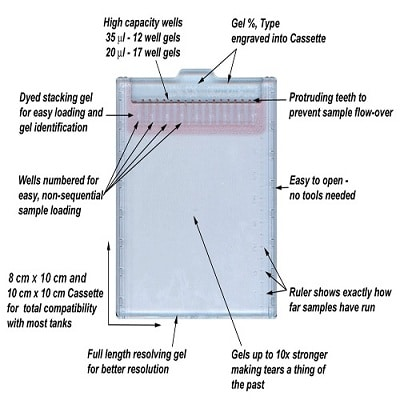 SDS-PAGE - TEO-Tricine Precast Gels - RunBlue™ (12%, 12-well, 8x10cm) (ab119207)
