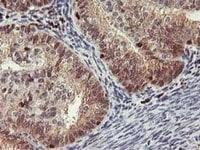 Immunohistochemistry (Formalin/PFA-fixed paraffin-embedded sections) - Anti-GRAP2 antibody [OTI1G2] (ab119244)