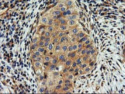 Immunohistochemistry (Formalin/PFA-fixed paraffin-embedded sections) - Anti-SNX8 antibody [OTI3C4] (ab119388)