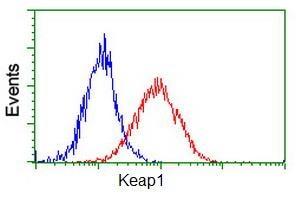 Flow Cytometry - Anti-Keap1 antibody [1B4] (ab119403)
