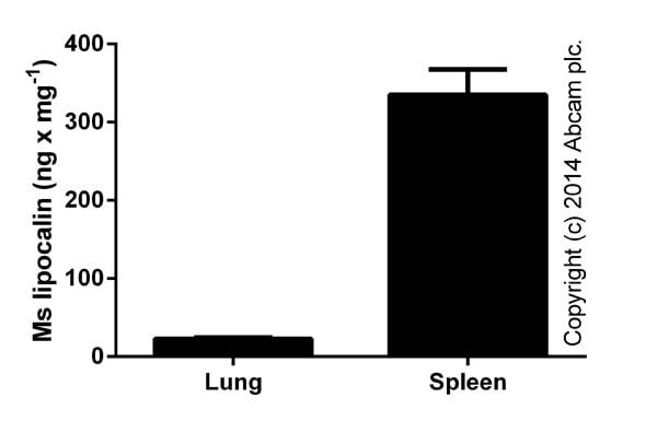 ELISA: Lipocalin-2 (NGAL) Mouse ELISA Kit (ab119601)