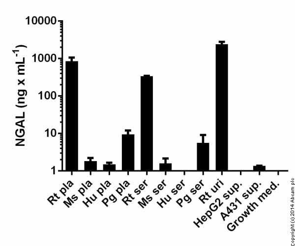 ab119602 Lipocalin-2 (NGAL) Rat ELISA Kit