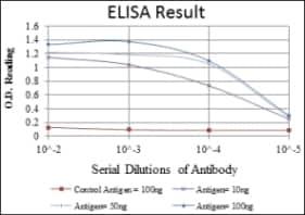 ELISA - Anti-Smad2 antibody [5G7] (ab119907)