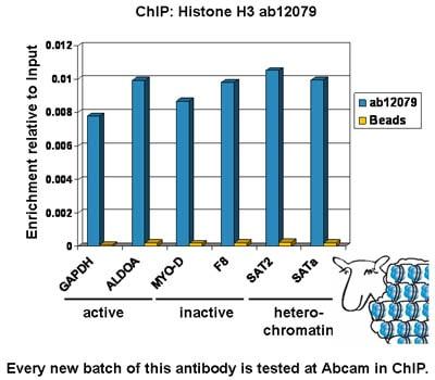 ChIP - Anti-Histone H3 antibody - ChIP Grade (ab12079)