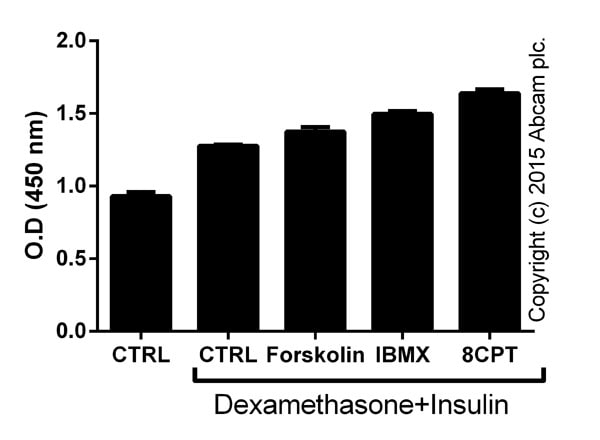 Functional Studies - Forskolin, Adenylyl cyclase activator (ab120058)