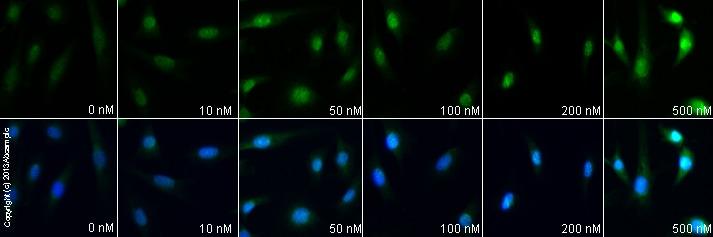 Functional Studies - Obestatin, endogenous peptide involved in feeding (ab120071)