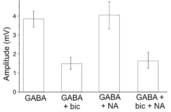 Functional Studies - (-)-Bicuculline methochloride, GABA<sub>A</sub> antagonist (ab120110)