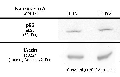 Functional Studies - Neurokinin A, Tachykinin peptide (ab120185)